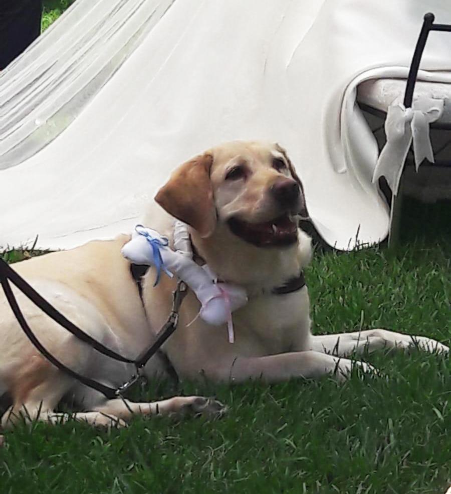 una boda muy especial perro